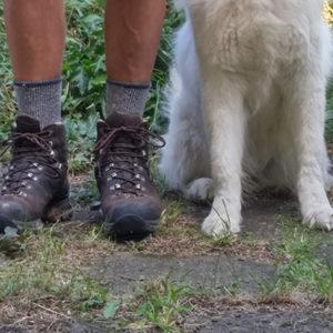 Berecz Tibor bakancsos lába és két kutyaláb