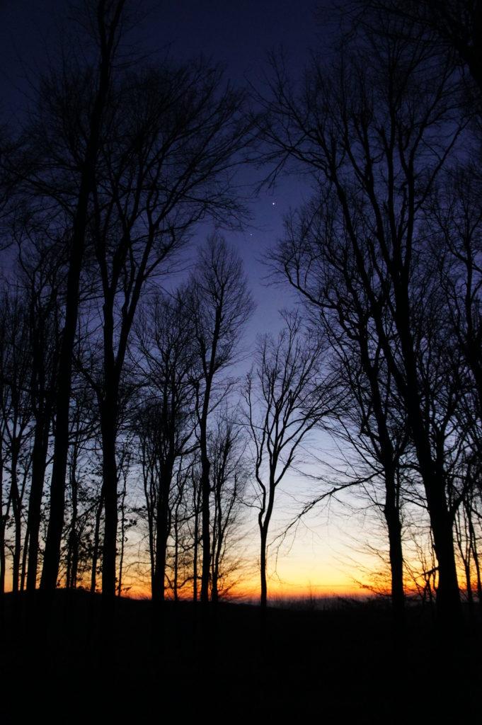 Éjszakai erdő