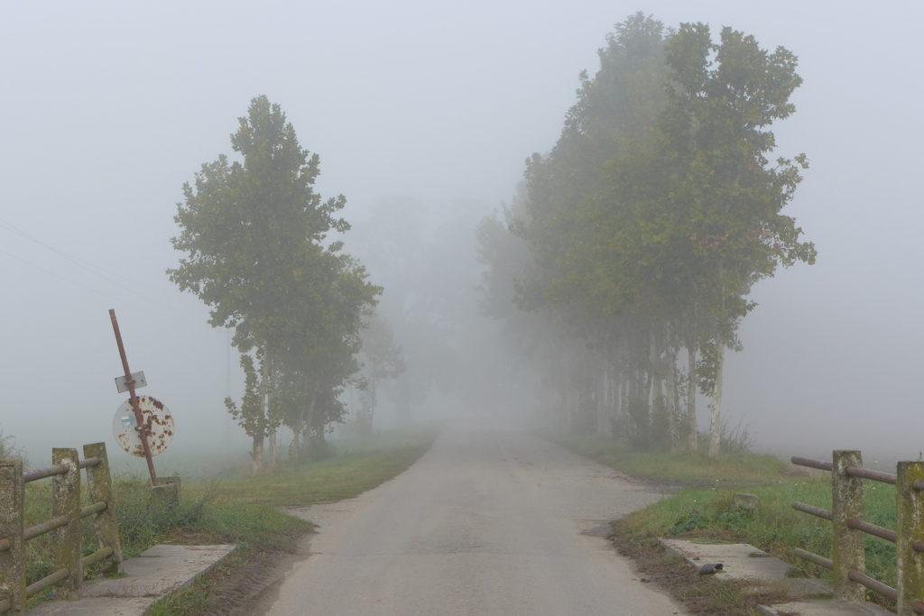 Ködbe vesző betonút, mellette fasorral