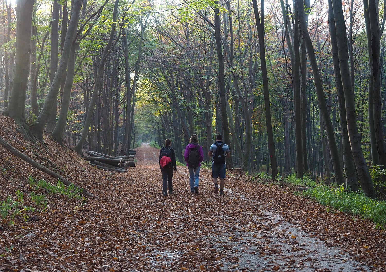 Három turista hátulról az őszi erdőben