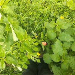 Szabó Eszter lába növények között