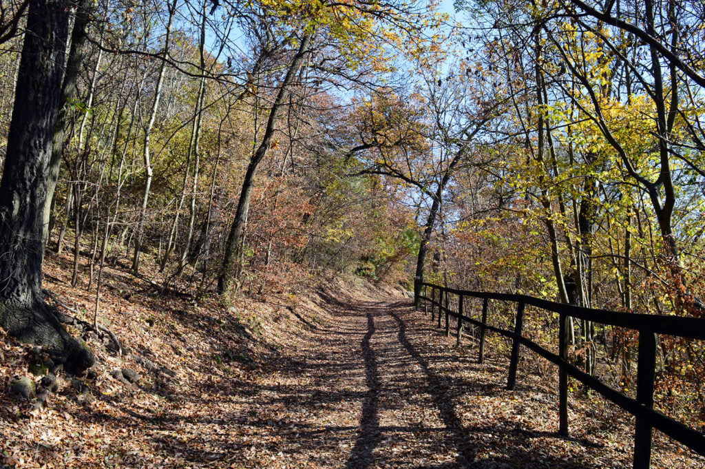 Út az őszi erdőben, mellette korláttal